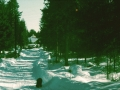 Morshyttan-538